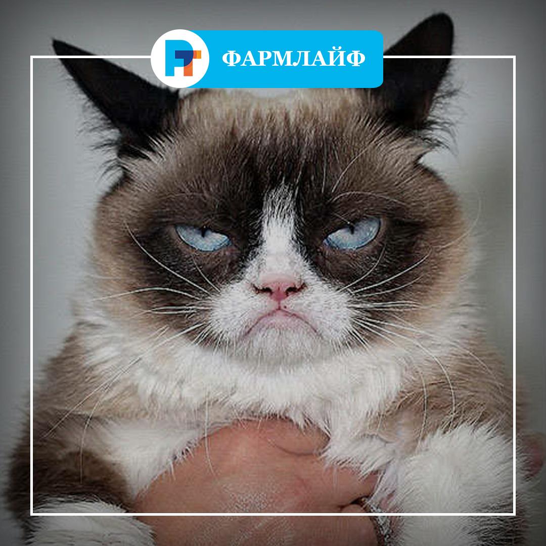 the original grumpy cat!